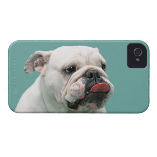 Bulldog funny face with tongue sticking out, gift iPhone 4 cases