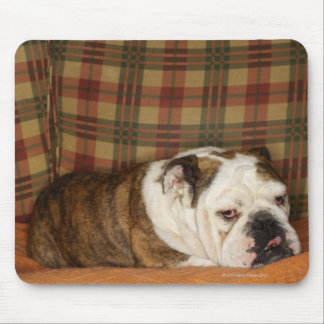 bulldog lying on a sofa mouse pad