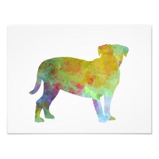 Bulldog of Bordeaux in watercolor Photo Print