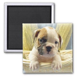 Bulldog Puppy in Basket Magnet
