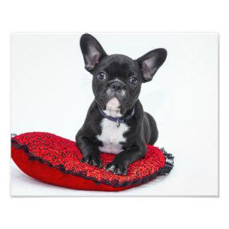 Bulldog Puppy Photo Print