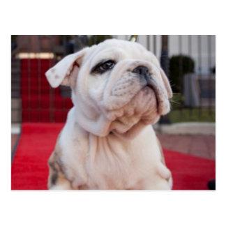 Bulldog Puppy Postcard