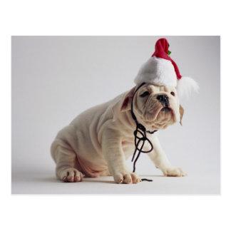 Bulldog Puppy Wearing Santa Hat Postcard