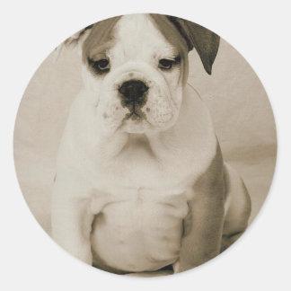 bulldog round sticker