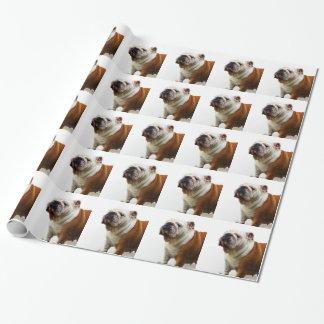 Bulldog Gift Wrap