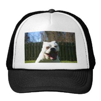Bulldog Yawn Cap