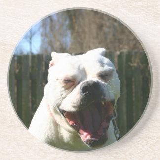 Bulldog Yawn Coaster