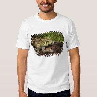 Bullfrog, Rana catesbeiana T Shirt