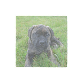 Bullma_puppy 2.png stone magnet