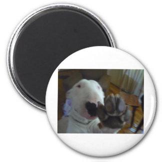 bully paw 6 cm round magnet