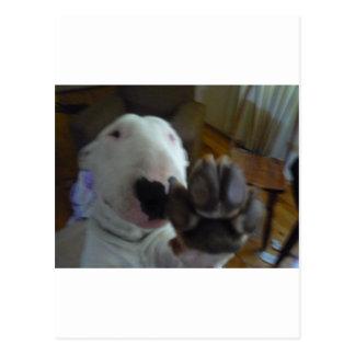 bully paw postcard