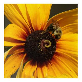 Bumble Bee, Acrylic Print. Acrylic Print