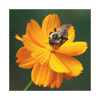 Bumble Bee and Flower, Wrapped Canvas Print.