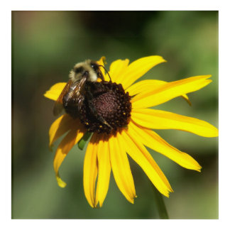 Bumble Bee and Flower, Wrapped Canvas Print. Acrylic Wall Art