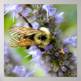 Bumble Bee Digital Watercolor Poster