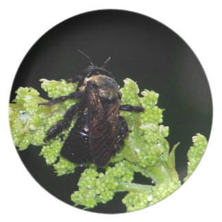 Bumble Bee In The Rain Dinner Plates