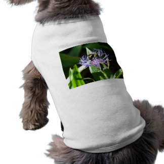 bumble bee on a bachelor button doggie tee shirt