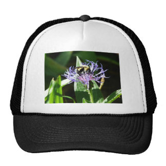 bumble bee,on a bachelor button trucker hat