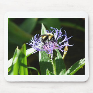 bumble bee on a bachelor button mouse pad