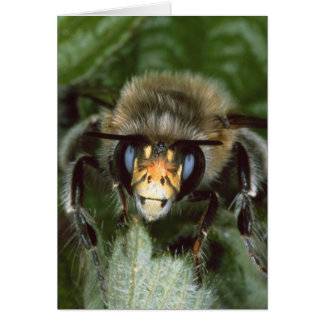 Bumble Bee On Leaf (Close-Up) Greeting Card