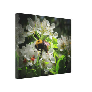 Bumble Bee on my pear tree Canvas Prints
