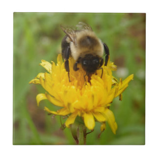 Bumble Bee on Yellow Dandelion Small Square Tile