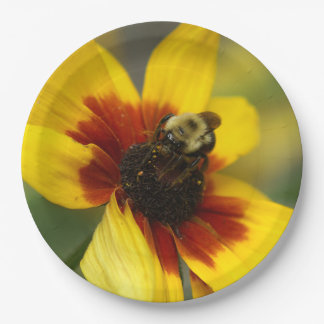 Bumble Bee, Paper Plates. Paper Plate
