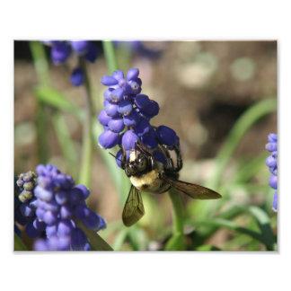 Bumble Bee, Photo Enlargement.