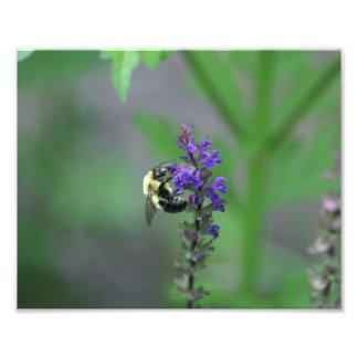 Bumble Bee Photo Enlargement.