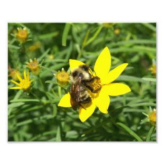 Bumble Bee, Photo Print.