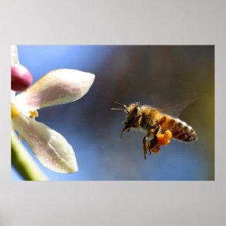 Bumble Bee pollen poster