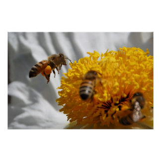 Bumble Bee pollen poster
