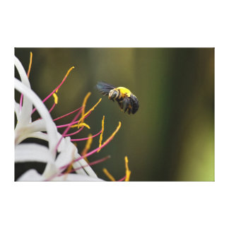BUMBLE BEE QUEENSLAND AUSTRALIA CANVAS PRINT