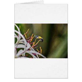 BUMBLE BEE QUEENSLAND AUSTRALIA CARD
