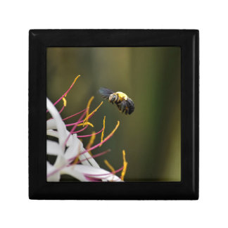 BUMBLE BEE QUEENSLAND AUSTRALIA SMALL SQUARE GIFT BOX