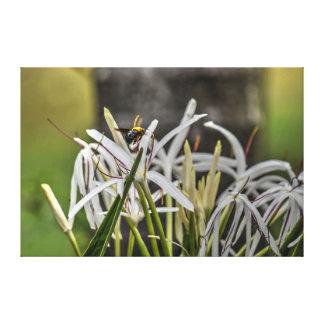 BUMBLE BEE RURAL QUEENSLAND AUSTRALIA CANVAS PRINT