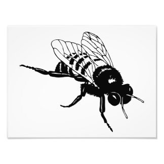 Bumble Bee Silhouette Art Photo