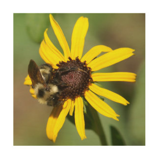 Bumble Bee, Wood Photo Print. Wood Canvases
