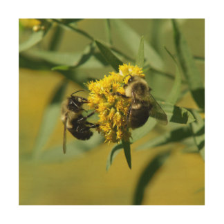 Bumble Bee, Wood Photo Print. Wood Print