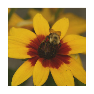Bumble Bee, Wood Photo Print. Wood Wall Art