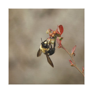 Bumble Bee, Wrapped Canvas Print.