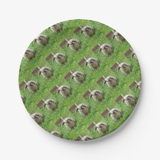Bumble Rabbit 7 Inch Paper Plate