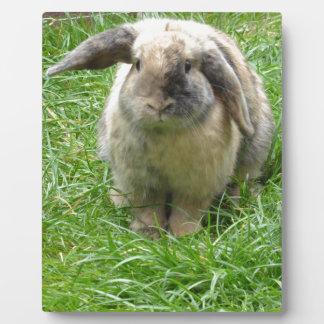 Bumble Rabbit Plaque