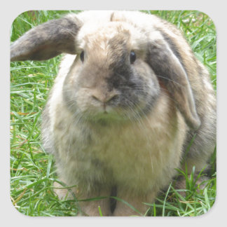 Bumble Rabbit Square Sticker