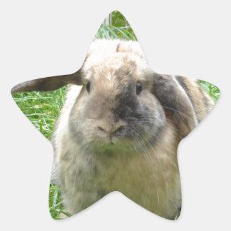 Bumble Rabbit Star Sticker