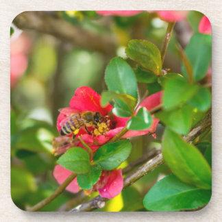 Bumblebee And Azalea Coaster