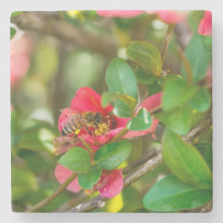 Bumblebee And Azalea Stone Coaster