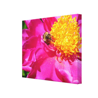 Bumblebee and Peony Canvas Print