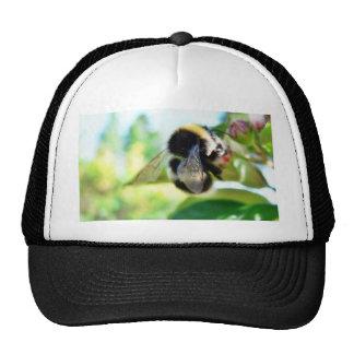 Bumblebee Collecting Polen Hats
