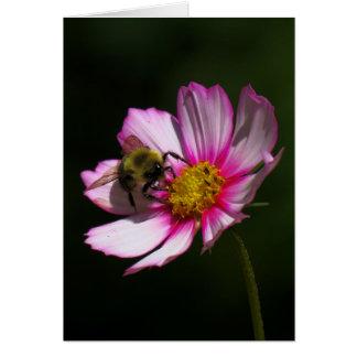 Bumblebee on Cosmos Card